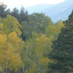 Autumn Colors in Rocky Mountain National Park